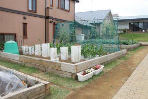 光の子菜園